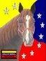 Hípicos de Venezuela canal de You Tube