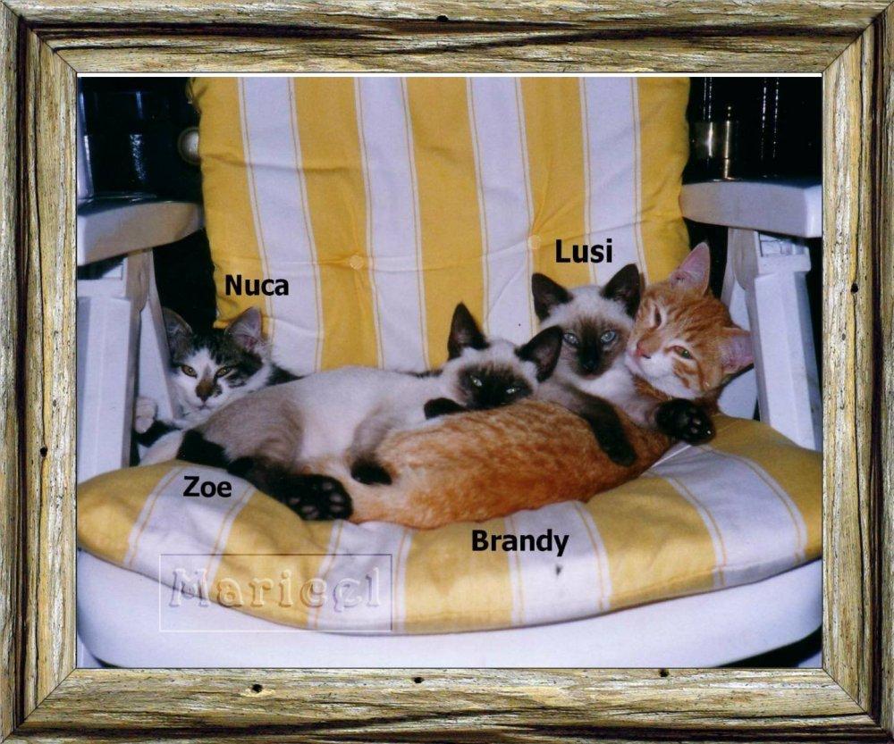 Los gatos y sus escritores Proyecto