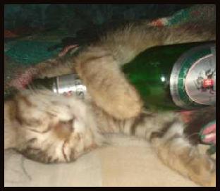 Drunk lolcat