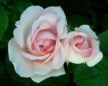 Clair Renaissance - en ljuv skönhet
