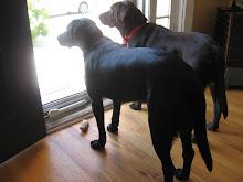 We always wait at the door.