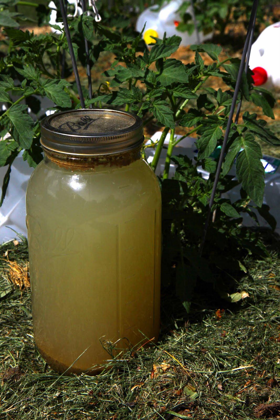 Organic plant fertilizer corpse tea for Fish meal fertilizer