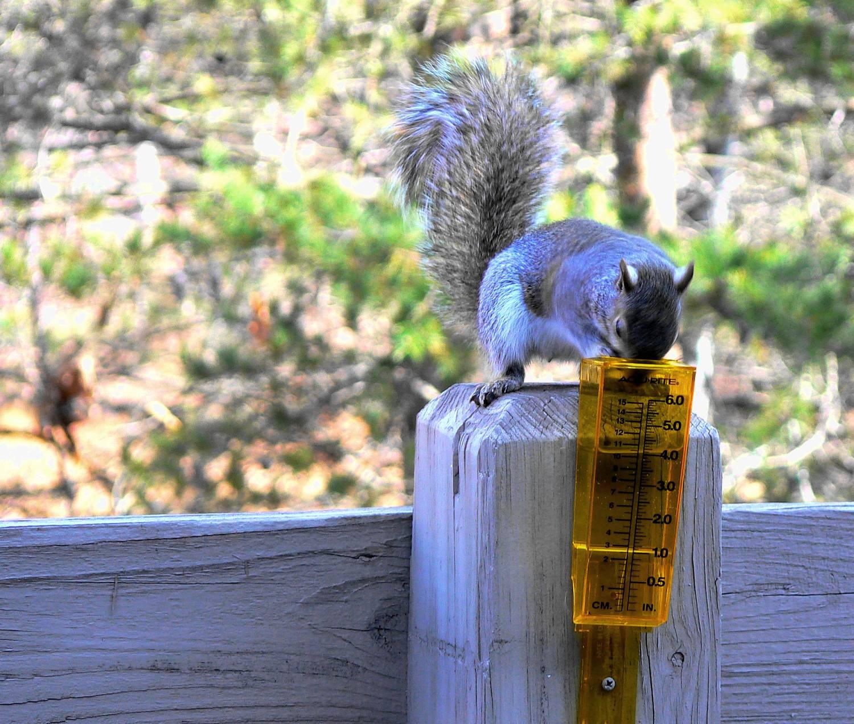 [squirrel.JPG]