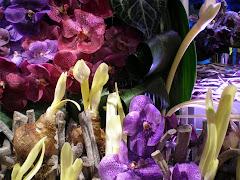 Philadelphia Flower Show 2009 modern