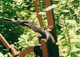 A Black snake in the wild.