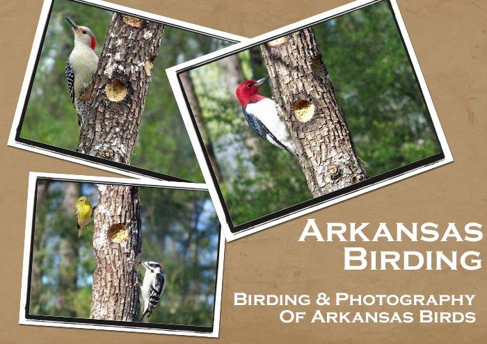 Arkansas Birding