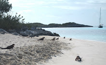A Day at the Beach - Iguana Style