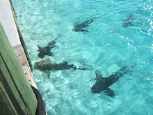 Nap Time for Nurse Sharks