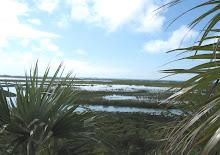 Shroud Cay Mangrove Swamps