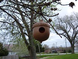 A Birdie's Nut House!