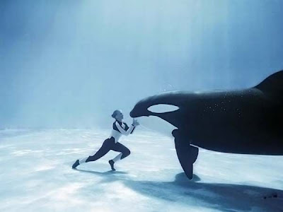 Buceando con una Orca
