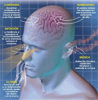 cerebro y sus partes