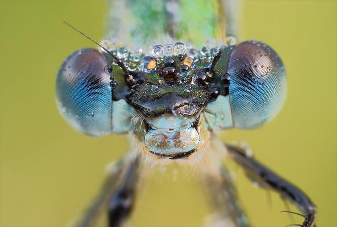 Insectos Sorprendentes