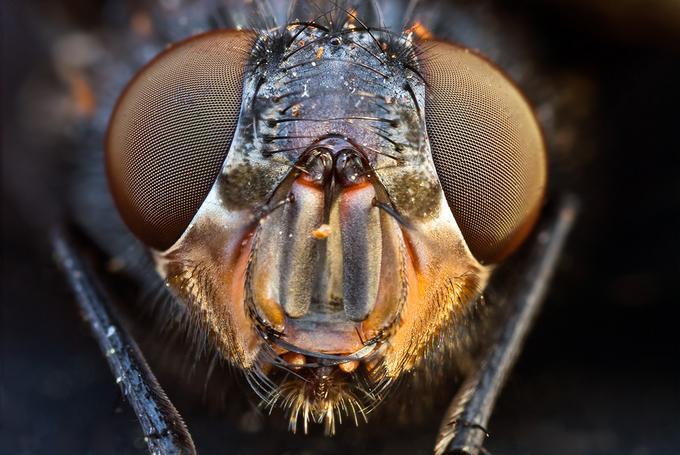 Fotos de Insectos Sorprendentes