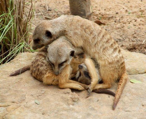 Animales Graciososr