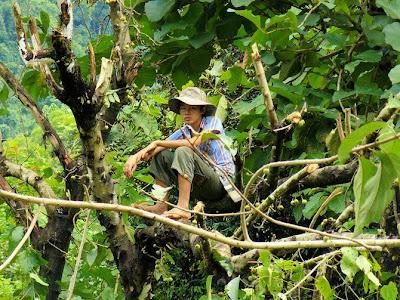 Trabajando en un Mar verde - Fotos de Laos de Ben Visbeek