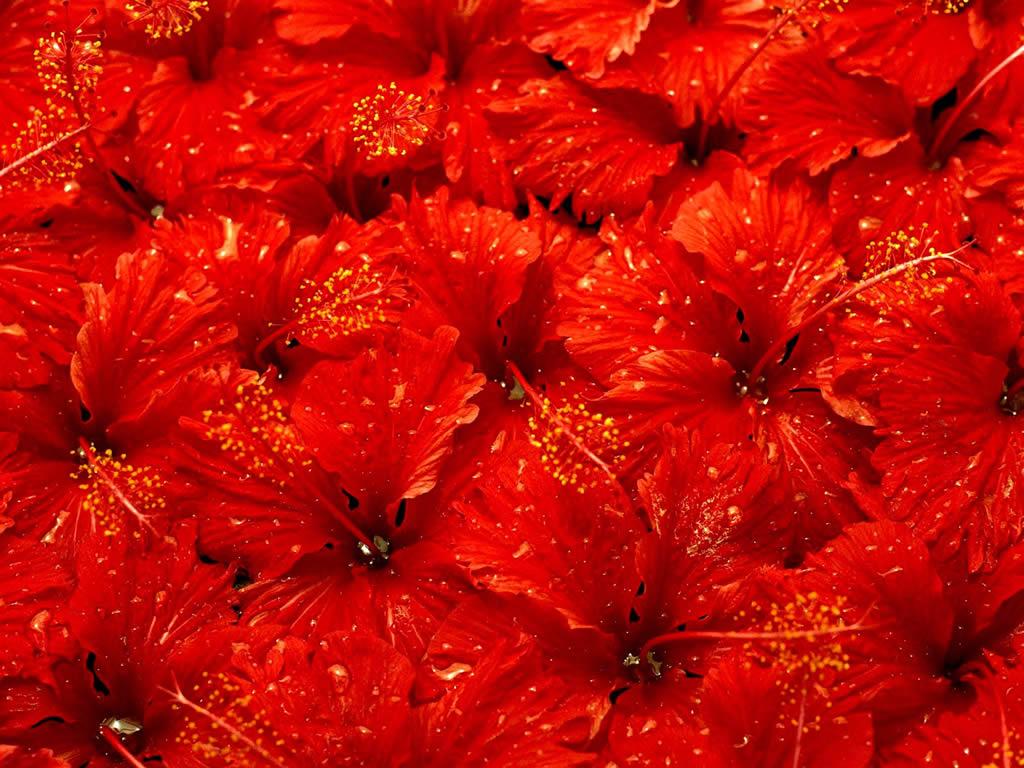 10 Wallpaper Bunga Cantik Gambar Bunga Foto Bunga