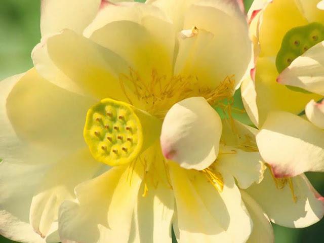 Fotos de Hermosas Flores 12