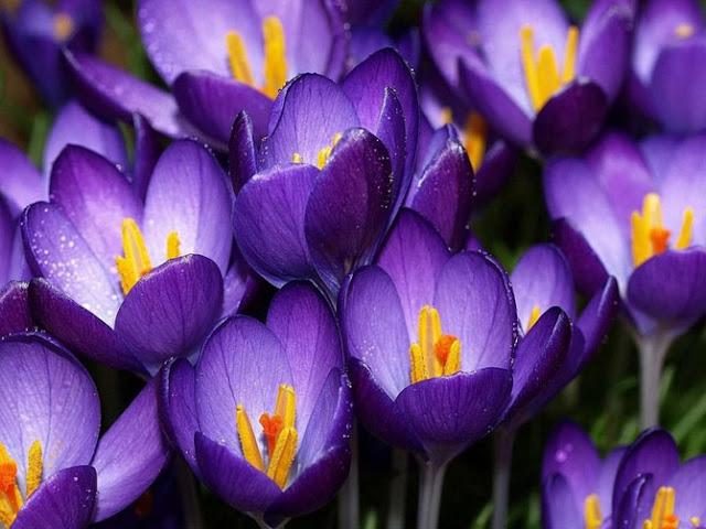Fotos de Hermosas Flores - 1