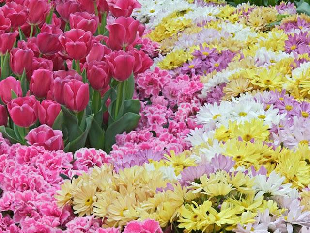 Fotos de Hermosas Flores - 2