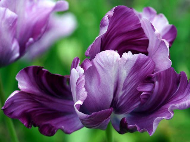 Fotos de Hermosas Flores - 3