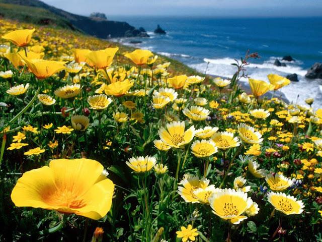 Fotos de Hermosas Flores 8