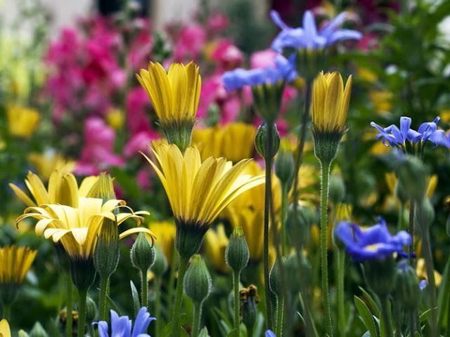 Fotos de Hermosas Flores 15