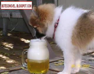 Animal bêbado