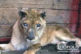 Sussy la leona