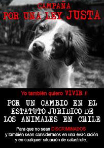 Por un cambio en el estatuto jurídico de los animales en Chile