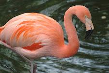 uno de los animales en peligro de extinción