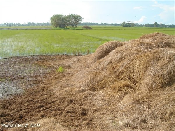 how to make organic fertilizer from food waste