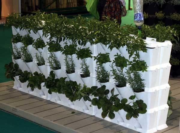 Garden center ejea plantas las hierbas aromaticas cultivo - Garden center ejea ...