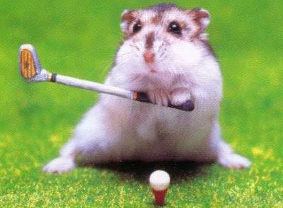 http://4.bp.blogspot.com/_1GPeLz5A6xk/Rwb8h4qc6eI/AAAAAAAAACE/GgjMDFxwH4s/s400/hamster_golf.jpg