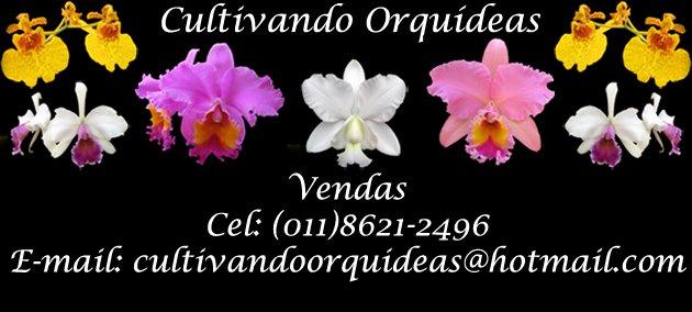 Cultivando Orquídeas