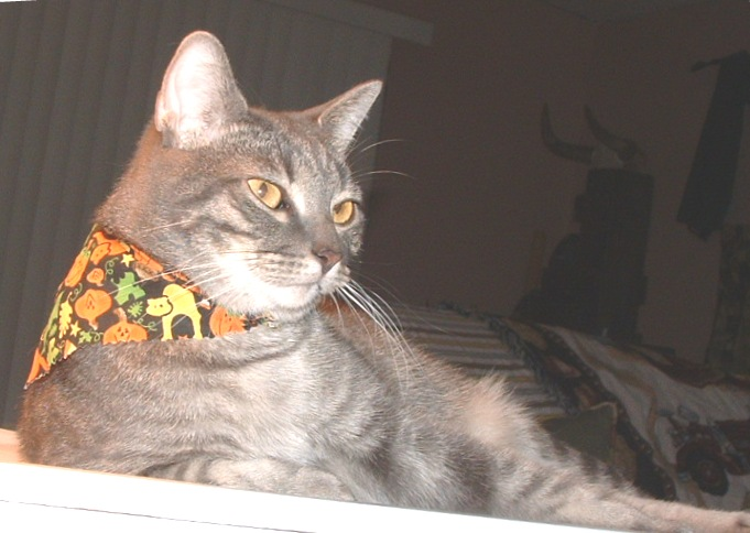 Smokey in costume on Halloween