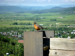 Robin Over Valley