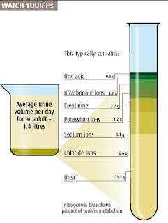 Urine Content