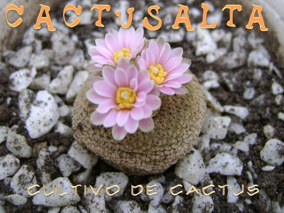 CACTUSALTA