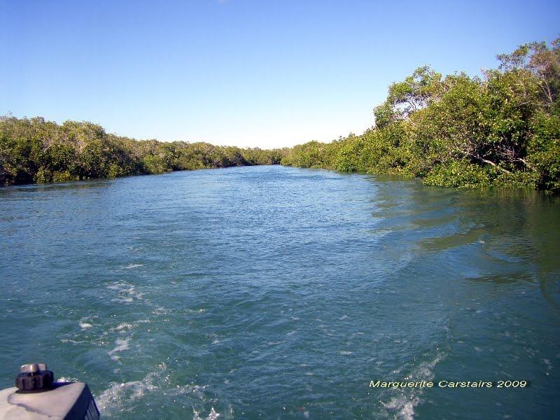coastal art maggi mangroves burrum heads river inter. Black Bedroom Furniture Sets. Home Design Ideas