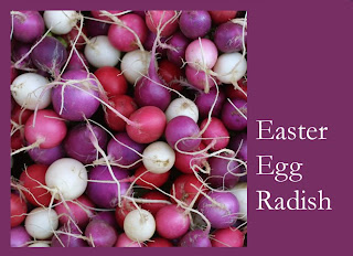 radish+easter+egg+01 Radish Sandwich   Never Doubt the French