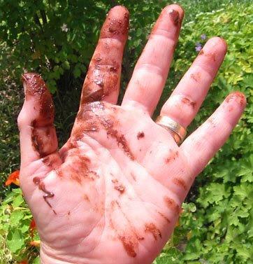 Chocolate Fingers & Pistachio Almond Mocha Biscotti
