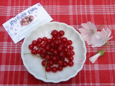 currants+in+bowl+01 Red Currant Jelly