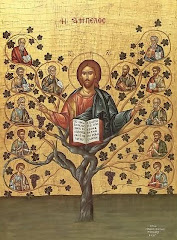† يسوع هو الكرمة الحقيقية