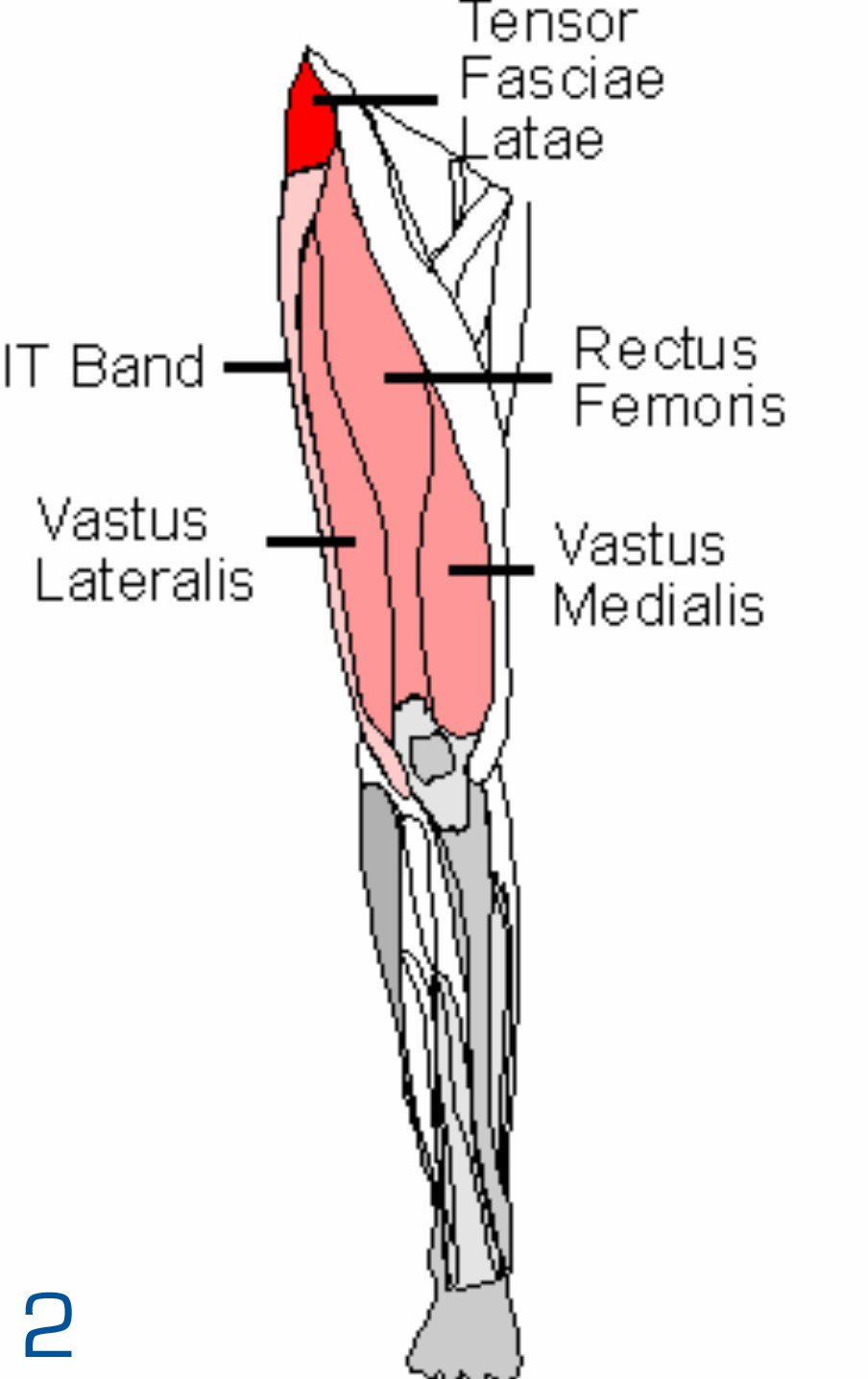 Muscles Of The Leg New Calendar Template Site