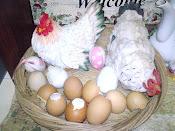 Ayam & telor