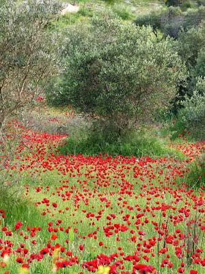 Τυπική εικόνα ελληνικού τοπίου. 'οσο