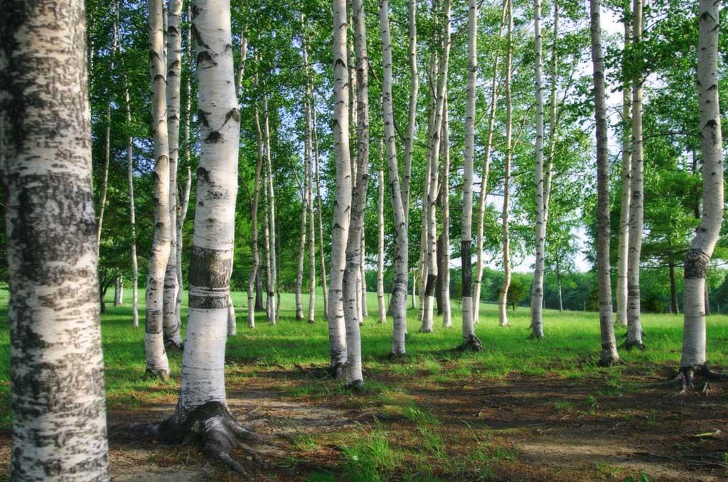 Моніторинг лісових екосистем