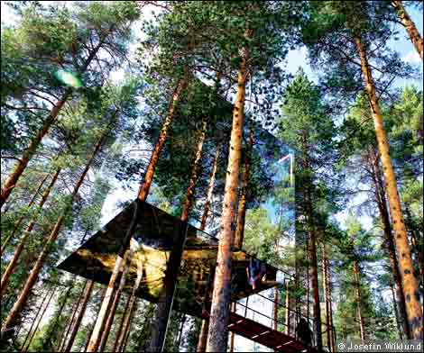 The Tree House Hotel. The treehouse hotel!