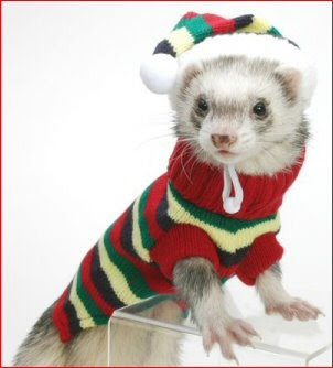 Cute Ferret Pictures